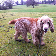 Hond ontwormen- Dierenkliniek Ittersum