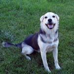 Hond steriliseren is goed voor de gezondheid – foto van Rennett Stowe