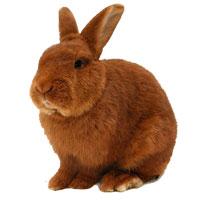 Laat uw konijn vaccineren bij Dierenkliniek Ittersum