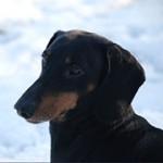 Een hond castreren levert u en hem veel voordelen op – foto: Tim Geers