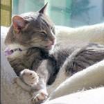 Laat uw kat steriliseren – foto van Jessica Merz