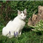 Anaalklieren kat: voorkom een ontsteking of laat uw dier behandelen.