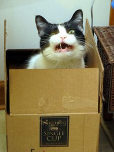 Gestreste kat: met de kat naar de dierenarts. Bron: Flickr: Frankieleon