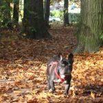 Harry de hond in Zandhove. Spaar voor gratis diervoeding van Royal Canin!
